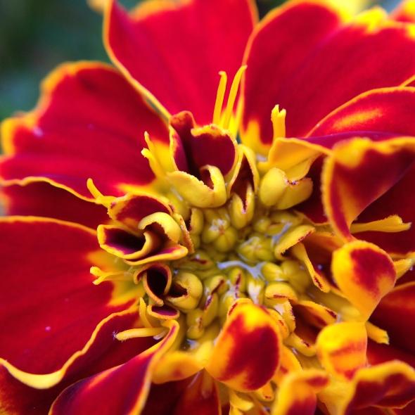 Flower in the Garden by Rebekah Clay